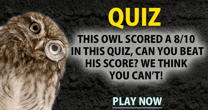 We think you can't beat the owl!